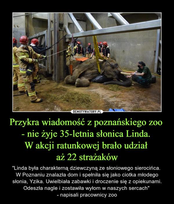"""Przykra wiadomość z poznańskiego zoo - nie żyje 35-letnia słonica Linda. W akcji ratunkowej brało udział aż 22 strażaków – """"Linda była charakterną dziewczyną ze słoniowego sierocińca. W Poznaniu znalazła dom i spełniła się jako ciotka młodego słonia, Yzika. Uwielbiała zabawki i droczenie się z opiekunami. Odeszła nagle i zostawiła wyłom w naszych sercach"""" - napisali pracownicy zoo"""