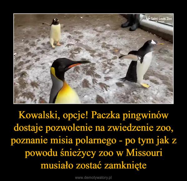 Kowalski, opcje! Paczka pingwinów dostaje pozwolenie na zwiedzenie zoo, poznanie misia polarnego - po tym jak z powodu śnieżycy zoo w Missouri musiało zostać zamknięte –