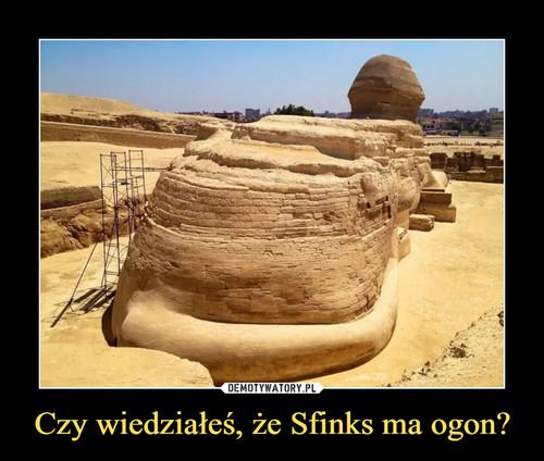 Czy wiedziałeś, że Sfinks ma ogon?