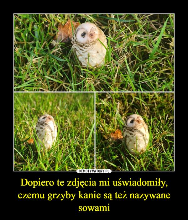 Dopiero te zdjęcia mi uświadomiły, czemu grzyby kanie są też nazywane sowami –