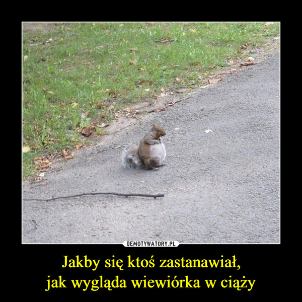 Jakby się ktoś zastanawiał,jak wygląda wiewiórka w ciąży –