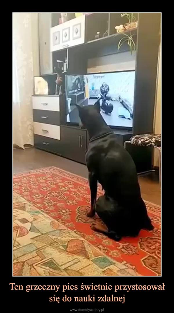 Ten grzeczny pies świetnie przystosował się do nauki zdalnej –