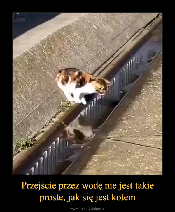 Przejście przez wodę nie jest takie proste, jak się jest kotem –