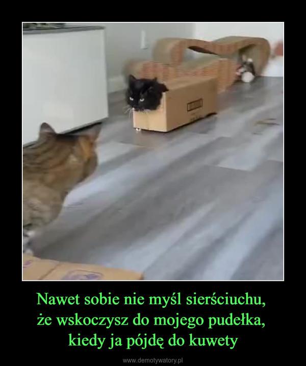 Nawet sobie nie myśl sierściuchu, że wskoczysz do mojego pudełka, kiedy ja pójdę do kuwety –