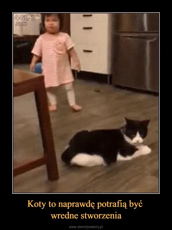 Koty to naprawdę potrafią być wredne stworzenia –
