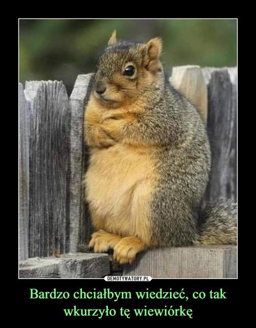 Bardzo chciałbym wiedzieć, co tak wkurzyło tę wiewiórkę