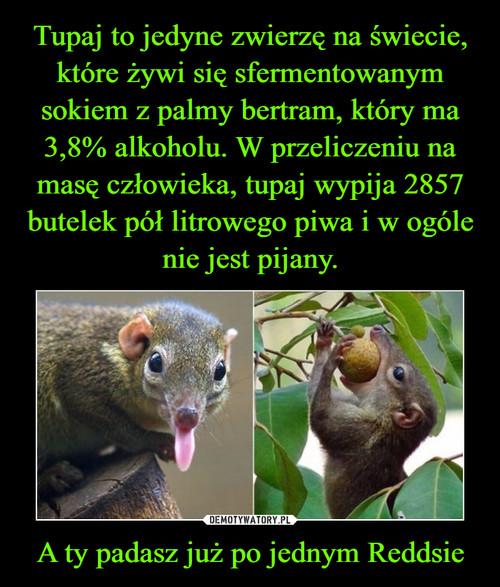 Tupaj to jedyne zwierzę na świecie, które żywi się sfermentowanym sokiem z palmy bertram, który ma 3,8% alkoholu. W przeliczeniu na masę człowieka, tupaj wypija 2857 butelek pół litrowego piwa i w ogóle nie jest pijany. A ty padasz już po jednym Reddsie