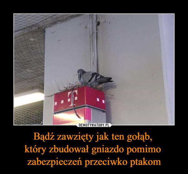 Bądź zawzięty jak ten gołąb, który zbudował gniazdo pomimo zabezpieczeń przeciwko ptakom –