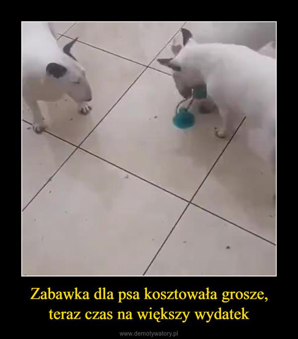 Zabawka dla psa kosztowała grosze, teraz czas na większy wydatek –