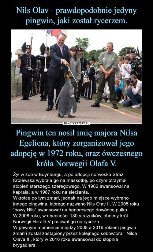 Nils Olav - prawdopodobnie jedyny pingwin, jaki został rycerzem. Pingwin ten nosił imię majora Nilsa Egeliena, który zorganizował jego adopcję w 1972 roku, oraz ówczesnego króla Norwegii Olafa V.