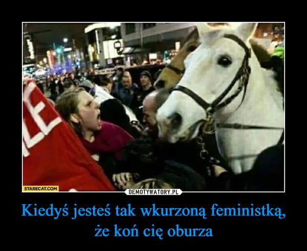 Kiedyś jesteś tak wkurzoną feministką, że koń cię oburza –