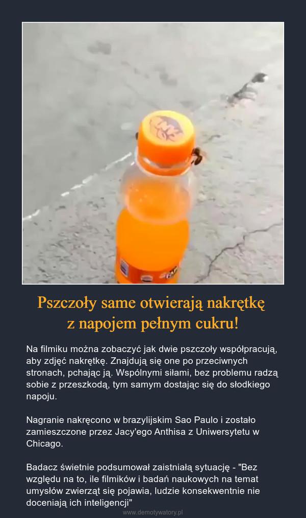 """Pszczoły same otwierają nakrętkę z napojem pełnym cukru! – Na filmiku można zobaczyć jak dwie pszczoły współpracują, aby zdjęć nakrętkę. Znajdują się one po przeciwnych stronach, pchając ją. Wspólnymi siłami, bez problemu radzą sobie z przeszkodą, tym samym dostając się do słodkiego napoju.Nagranie nakręcono w brazylijskim Sao Paulo i zostało zamieszczone przez Jacy'ego Anthisa z Uniwersytetu w Chicago.Badacz świetnie podsumował zaistniałą sytuację - """"Bez względu na to, ile filmików i badań naukowych na temat umysłów zwierząt się pojawia, ludzie konsekwentnie nie doceniają ich inteligencji"""""""