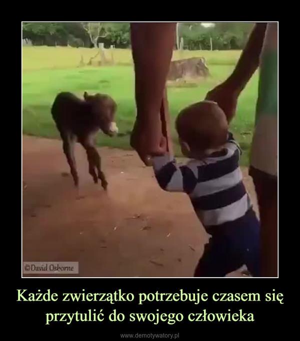 Każde zwierzątko potrzebuje czasem się przytulić do swojego człowieka –