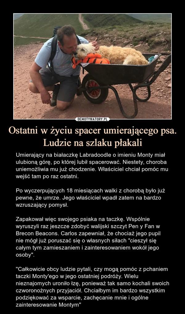 """Ostatni w życiu spacer umierającego psa. Ludzie na szlaku płakali – Umierający na białaczkę Labradoodle o imieniu Monty miał ulubioną górę, po której lubił spacerować. Niestety, choroba uniemożliwia mu już chodzenie. Właściciel chciał pomóc mu wejść tam po raz ostatni.Po wyczerpujących 18 miesiącach walki z chorobą było już pewne, że umrze. Jego właściciel wpadł zatem na bardzo wzruszający pomysł.Zapakował więc swojego psiaka na taczkę. Wspólnie wyruszyli raz jeszcze zdobyć walijski szczyt Pen y Fan w Brecon Beacons. Carlos zapewniał, że chociaż jego pupil nie mógł już poruszać się o własnych siłach """"cieszył się całym tym zamieszaniem i zainteresowaniem wokół jego osoby"""".''Całkowicie obcy ludzie pytali, czy mogą pomóc z pchaniem taczki Monty'ego w jego ostatniej podróży. Wielu nieznajomych uroniło łzę, ponieważ tak samo kochali swoich czworonożnych przyjaciół. Chciałbym im bardzo wszystkim podziękować za wsparcie, zachęcanie mnie i ogólne zainteresowanie Montym''"""