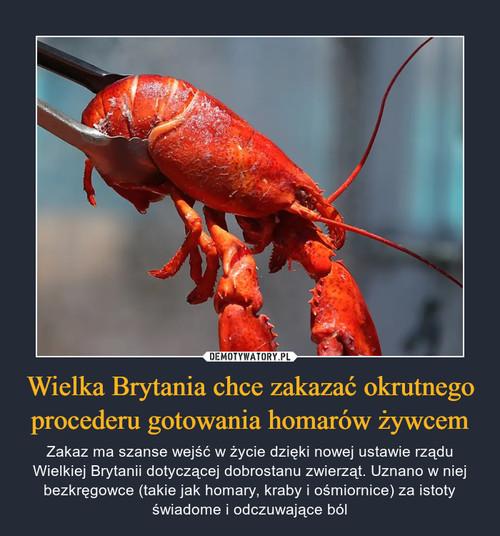 Wielka Brytania chce zakazać okrutnego procederu gotowania homarów żywcem