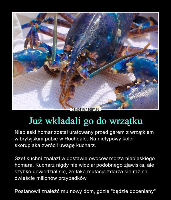 """Już wkładali go do wrzątku – Niebieski homar został uratowany przed garem z wrzątkiem w brytyjskim pubie w Rochdale. Na nietypowy kolor skorupiaka zwrócił uwagę kucharz.Szef kuchni znalazł w dostawie owoców morza niebieskiego homara. Kucharz nigdy nie widział podobnego zjawiska, ale szybko dowiedział się, że taka mutacja zdarza się raz na dwieście milionów przypadków.Postanowił znaleźć mu nowy dom, gdzie """"będzie doceniany"""""""