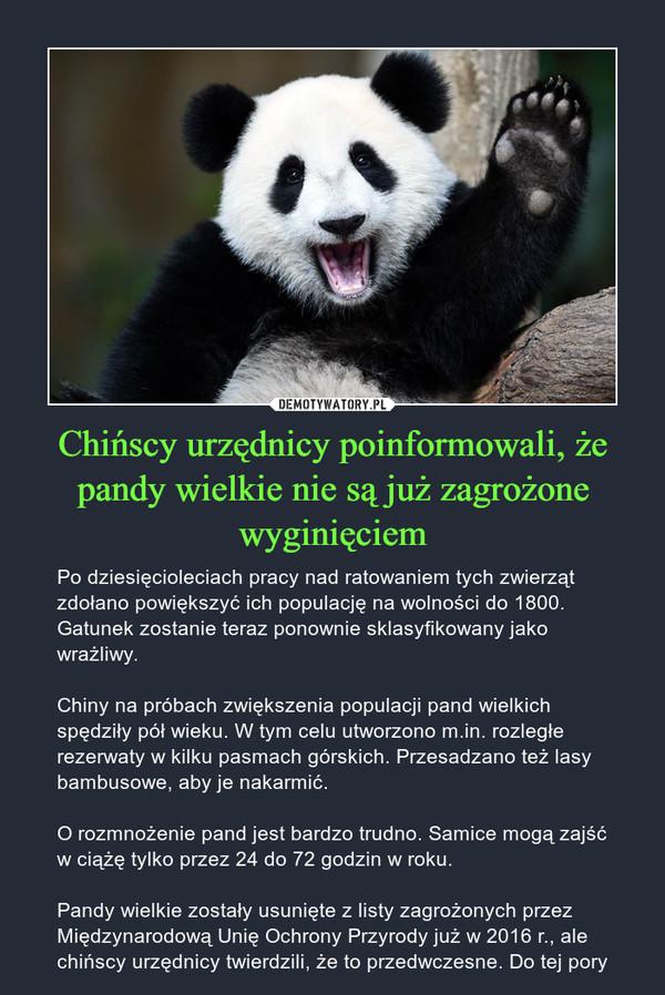 Chińscy urzędnicy poinformowali, że pandy wielkie nie są już zagrożone wyginięciem – Po dziesięcioleciach pracy nad ratowaniem tych zwierząt zdołano powiększyć ich populację na wolności do 1800. Gatunek zostanie teraz ponownie sklasyfikowany jako wrażliwy.Chiny na próbach zwiększenia populacji pand wielkich spędziły pół wieku. W tym celu utworzono m.in. rozległe rezerwaty w kilku pasmach górskich. Przesadzano też lasy bambusowe, aby je nakarmić.O rozmnożenie pand jest bardzo trudno. Samice mogą zajść w ciążę tylko przez 24 do 72 godzin w roku.Pandy wielkie zostały usunięte z listy zagrożonych przez Międzynarodową Unię Ochrony Przyrody już w 2016 r., ale chińscy urzędnicy twierdzili, że to przedwczesne. Do tej pory