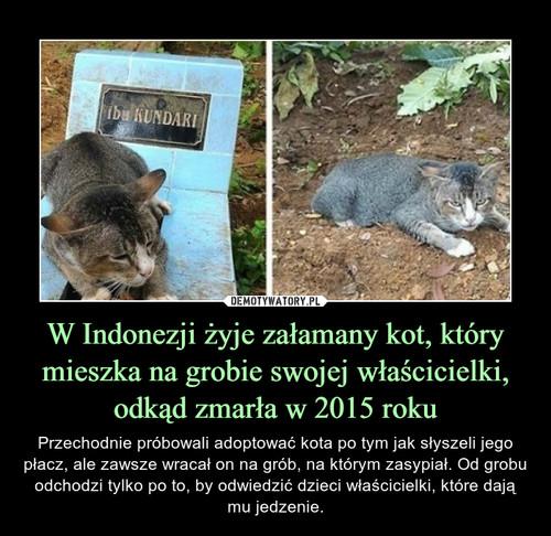 W Indonezji żyje załamany kot, który mieszka na grobie swojej właścicielki, odkąd zmarła w 2015 roku