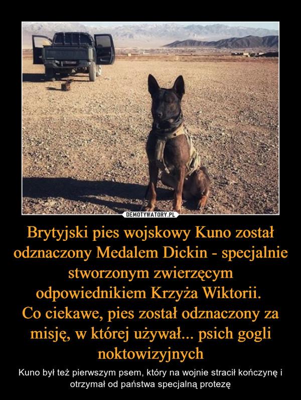 Brytyjski pies wojskowy Kuno został odznaczony Medalem Dickin - specjalnie stworzonym zwierzęcym odpowiednikiem Krzyża Wiktorii. Co ciekawe, pies został odznaczony za misję, w której używał... psich gogli noktowizyjnych – Kuno był też pierwszym psem, który na wojnie stracił kończynę i otrzymał od państwa specjalną protezę