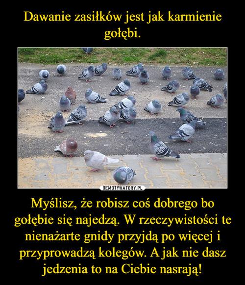 Dawanie zasiłków jest jak karmienie gołębi. Myślisz, że robisz coś dobrego bo gołębie się najedzą. W rzeczywistości te nienażarte gnidy przyjdą po więcej i przyprowadzą kolegów. A jak nie dasz jedzenia to na Ciebie nasrają!