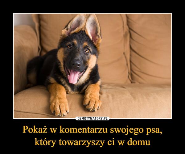 Pokaż w komentarzu swojego psa,który towarzyszy ci w domu –