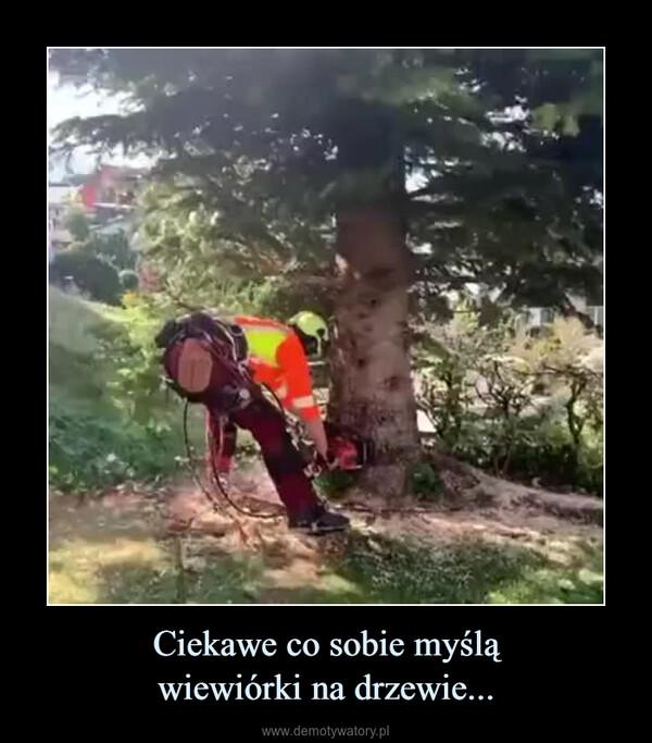 Ciekawe co sobie myśląwiewiórki na drzewie... –