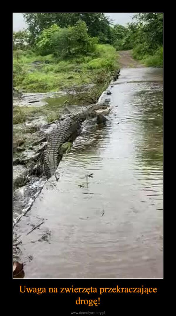 Uwaga na zwierzęta przekraczające drogę! –