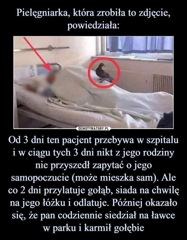 Od 3 dni ten pacjent przebywa w szpitalu i w ciągu tych 3 dni nikt z jego rodziny nie przyszedł zapytać o jego samopoczucie (może mieszka sam). Ale co 2 dni przylatuje gołąb, siada na chwilę na jego łóżku i odlatuje. Później okazało się, że pan codziennie siedział na ławce w parku i karmił gołębie –