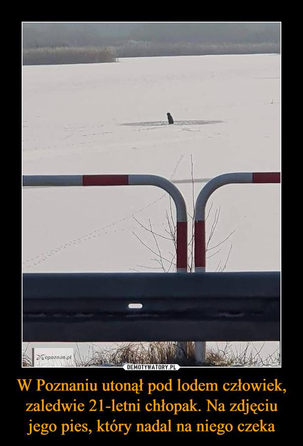 W Poznaniu utonął pod lodem człowiek, zaledwie 21-letni chłopak. Na zdjęciu jego pies, który nadal na niego czeka